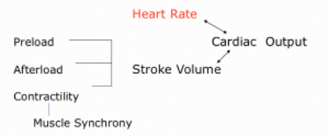 pccn-hemodynamics