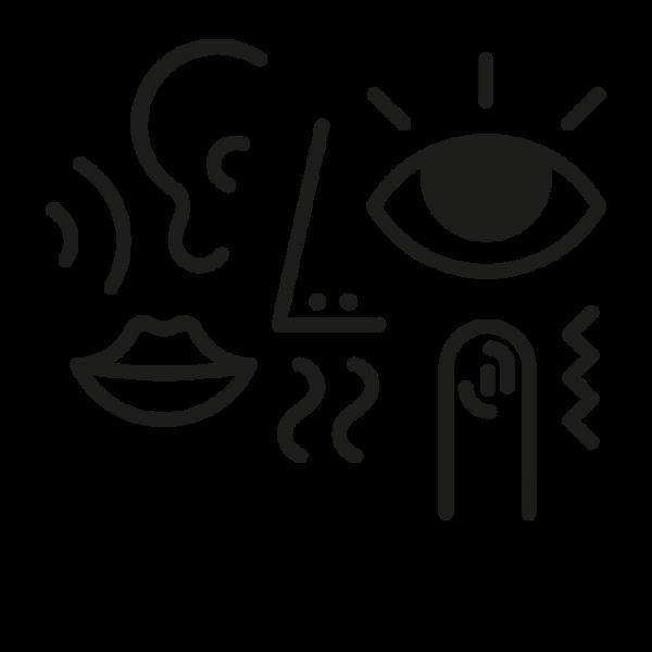 Sensory Memory and the 5 Senses