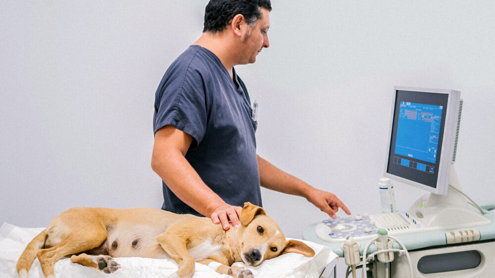 A veterinarian monitors and performs tests on a dog.