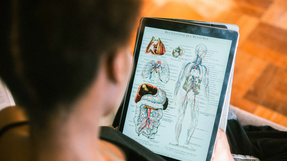 A person studies diagrams of blood flow through the body on a tablet.