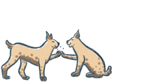 Two lynx high five each other. Illustration.