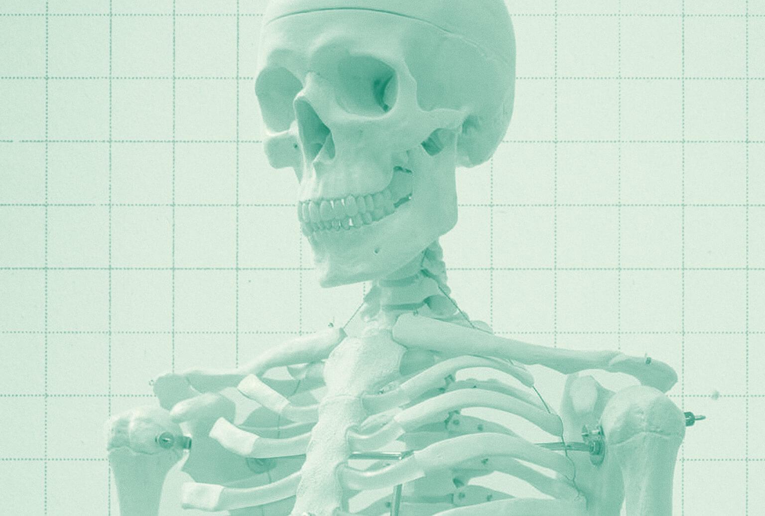 Upper torso and head of a skeleton model.