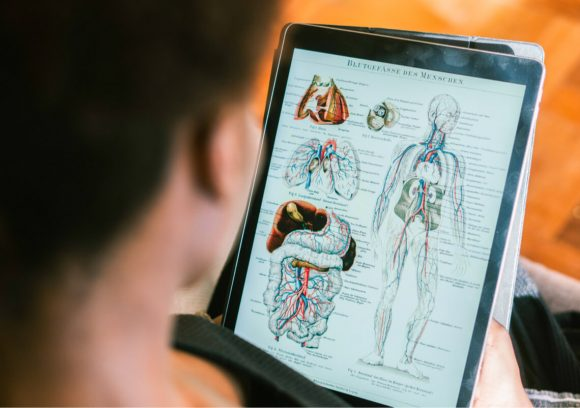 Person reviewing anatomy diagram on a tablet.